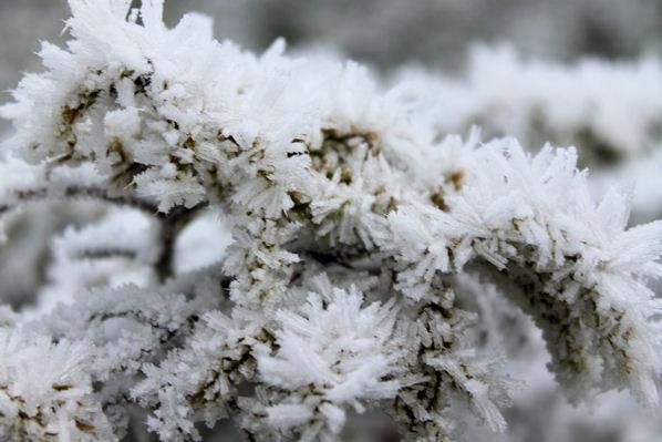 Hjartir sneeuw 10.11.2011