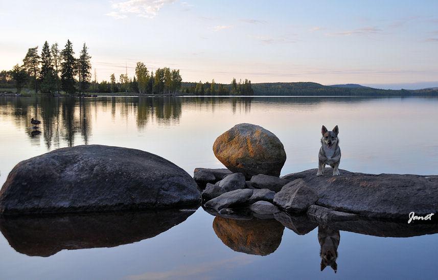 jive-op-steen-spiegelbeeld-17-09-2016