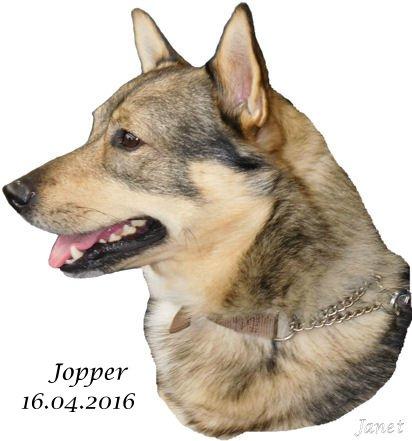 Jopper Site 16.04