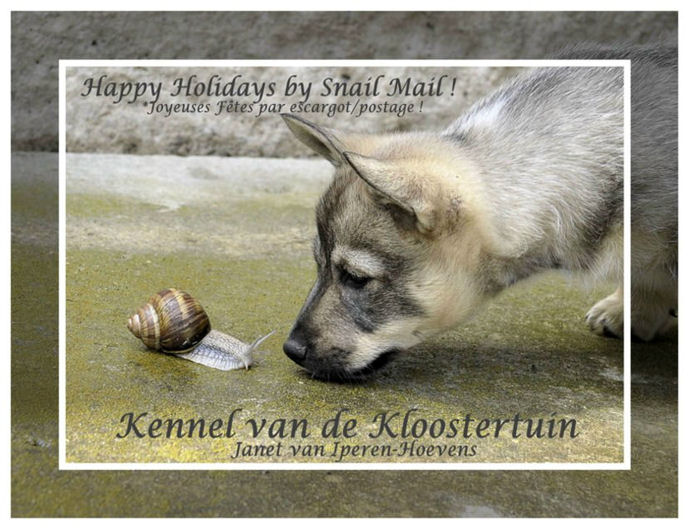 Kerstkaart Kennel van de Kloostertuin 2014 LR