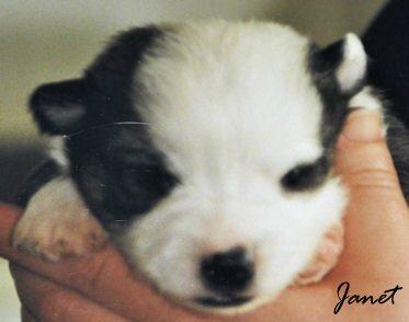 Pup miskleur wit