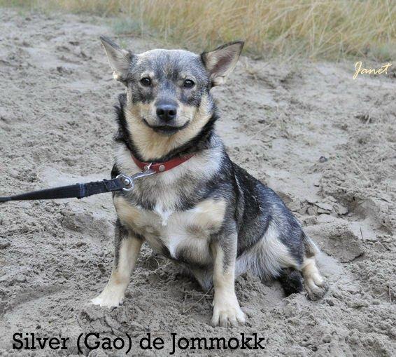 Silver A  Gao de Jommokk