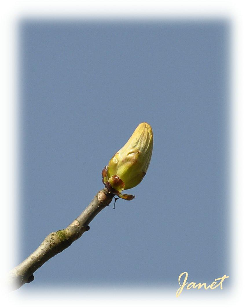 24.03.2011 lente 1