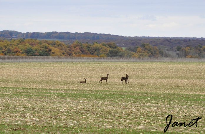 Bambi 5 02.11.2010