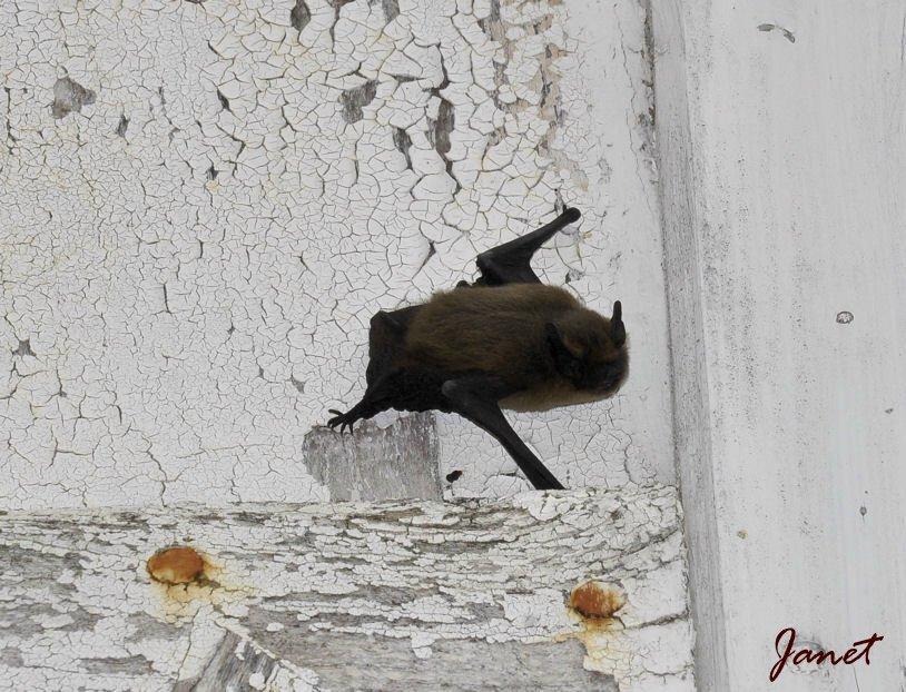 Batman 3 26.08.2012