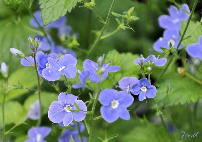Fleur Lunery C