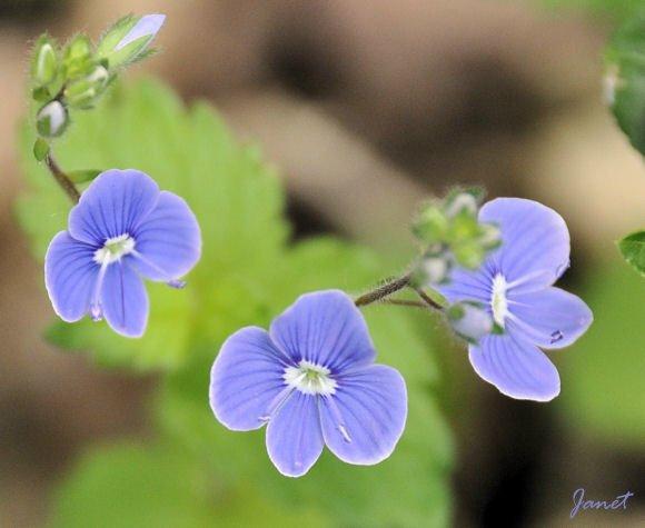 Fleur Lunery D