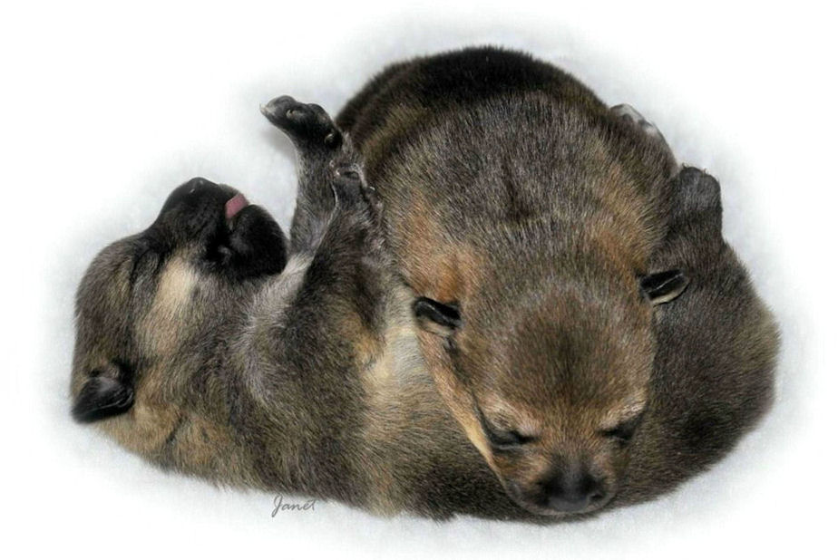 2 puppies 12.04.2013