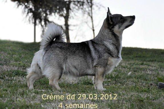 Crème 29.03.2012 4wk