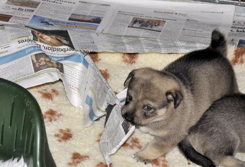 feale 2 21.06.2010
